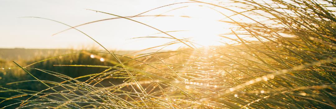 Daioni Organic's Top 5 Picnic Spots