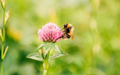 Wildlife Conservation – Organic September